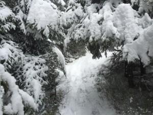 Une bonne couche de neige