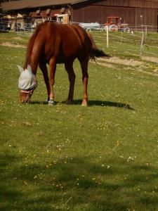 Hauteville et ses chevaux!