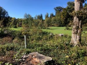 Forêt .. clairière.. Buechried