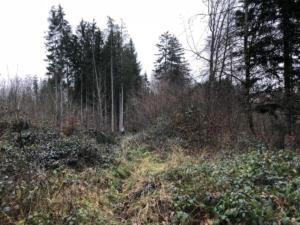 par la forêt des Fours,