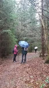 La forêt du Gottu d'avau avant