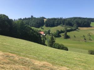 La tour vue de Studweid